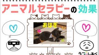 【可愛い猫画像】アニマルセラピーはうつ病に効果あるの?